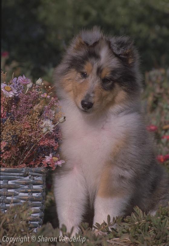 Amelia as a puppy!