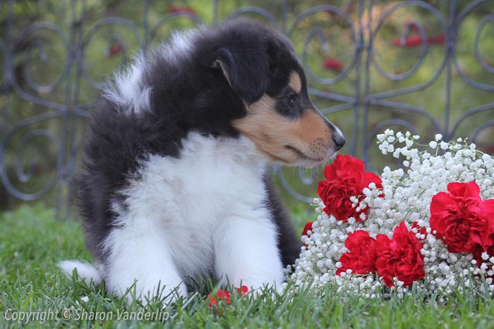 WM_New male puppy2