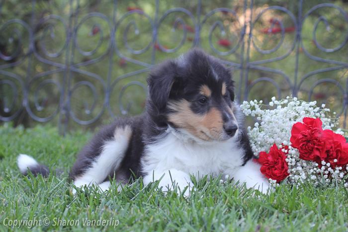 WM_New male puppy3