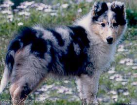 WM_maximillan_pupbody